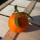 Clementine 15Kg