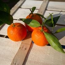 clementine-di-muravera-5
