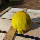 Limoni 15Kg